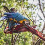 Papagayos en Parque Histórico Guayaquil
