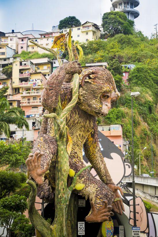mono machin capuchino de guayaquil
