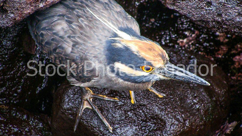 BirdPic Stockipic