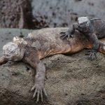 """<span itemprop=""""name"""">Galapagos : Iguanas</span>"""