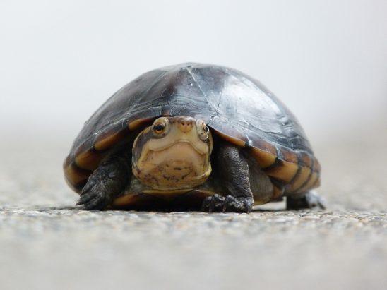 Tortuga Feliz | Happy Turtle Stockipic